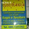 Toelettatura catania