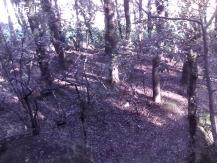 vendesi bosco(origine vigneto)425mq