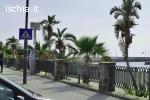 Vendo PIANTE su spiaggia CHIAIA a Forio