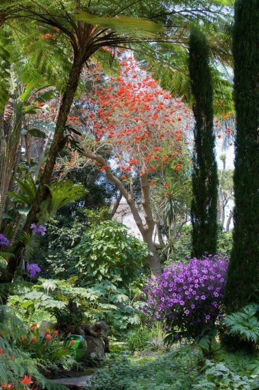 Fotogallery giardini la mortella - Giardino la mortella ...