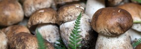 "Are we all mushroom ""foragers""?"