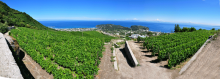 Cantine Crateca Vini Ischia