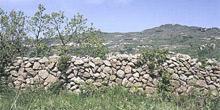 Bosco dei Frassitelli