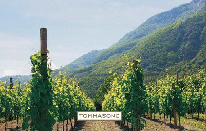 Azienda Agricola Tommasone