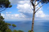 Mare e Pinete - Isola di Ischia