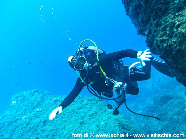 diving-ischia-31